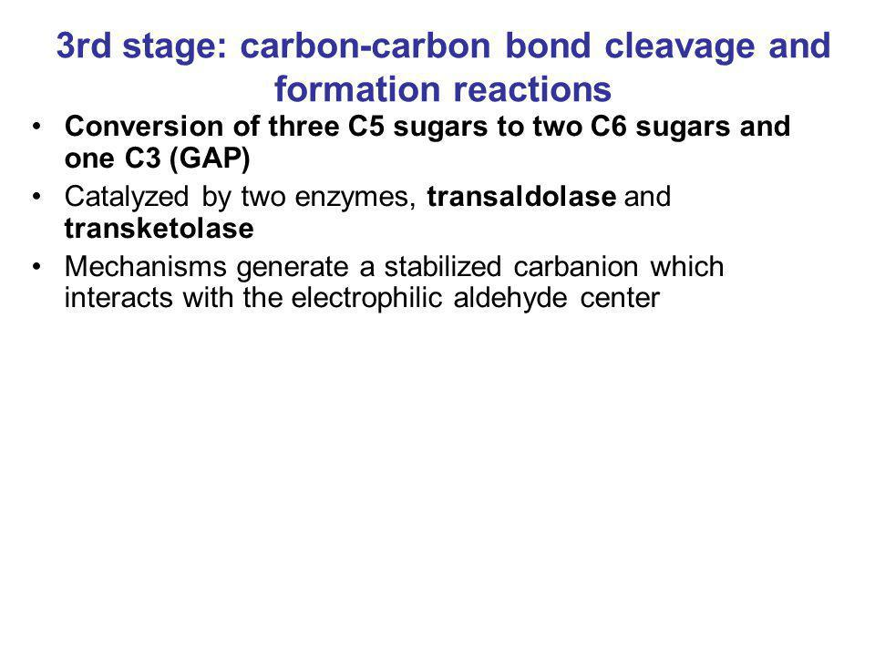 3rd stage: carbon-carbon bond cleavage and formation reactions Conversion of three C5 sugars to two C6 sugars and one C3 (GAP) Catalyzed by two enzyme
