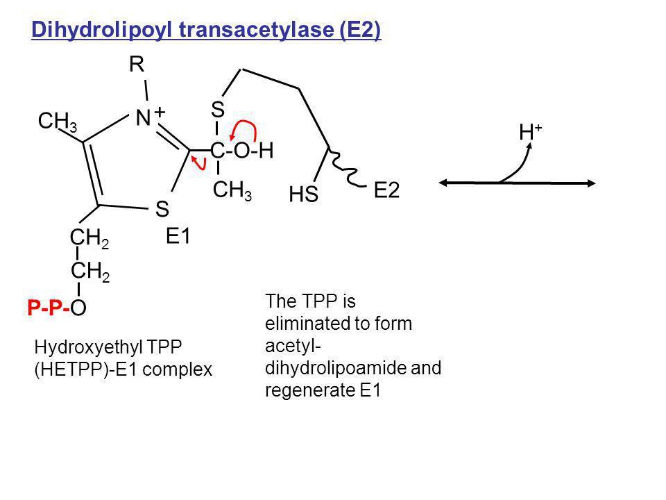 Hydroxyethyl TPP (HETPP)-E1 complex CH 3 P-P-O R CH 2 C-O-H CH 3 S N + Dihydrolipoyl transacetylase (E2) HS S E2 E1 H+H+ The TPP is eliminated to form
