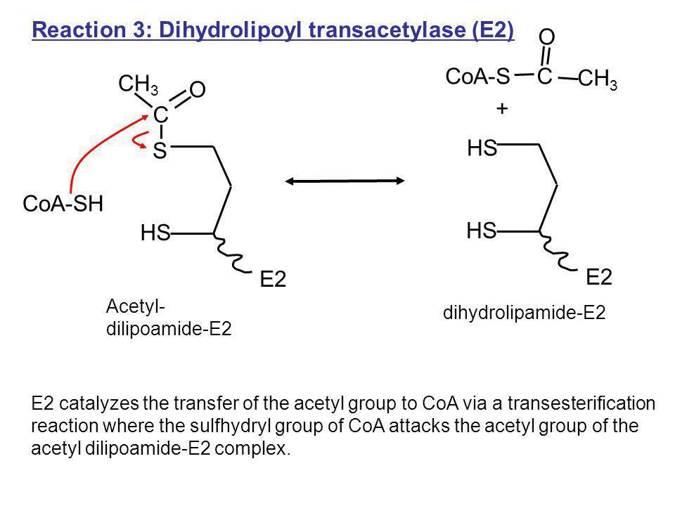 C CH 3 Reaction 3: Dihydrolipoyl transacetylase (E2) HS E2 Acetyl- dilipoamide-E2 O C CH 3 HS S E2 O CoA-SH CoA-S dihydrolipamide-E2 E2 catalyzes the
