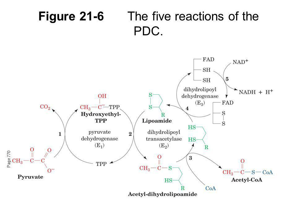 Figure 21-6The five reactions of the PDC. Page 770
