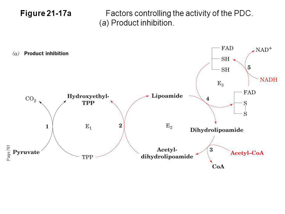 Figure 21-17aFactors controlling the activity of the PDC. (a) Product inhibition. Page 781