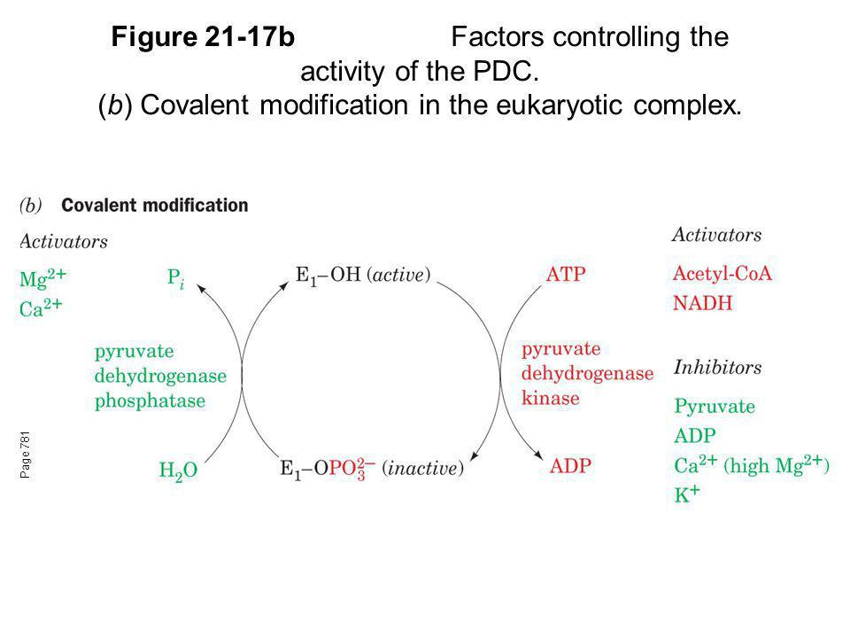 Figure 21-17bFactors controlling the activity of the PDC. (b) Covalent modification in the eukaryotic complex. Page 781