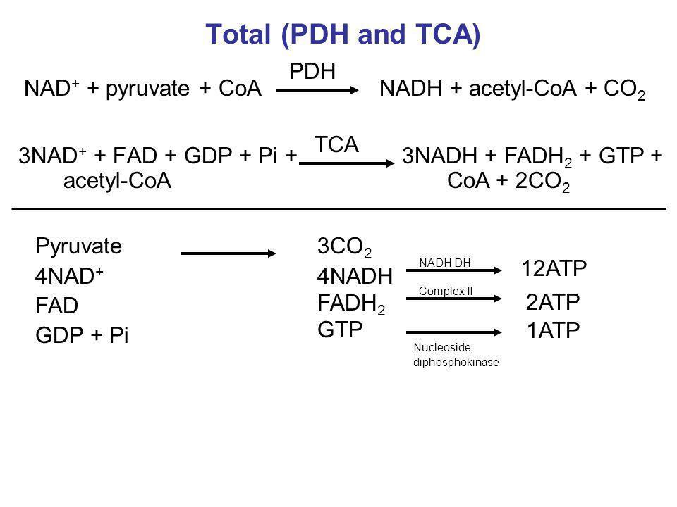 Total (PDH and TCA) 3NAD + + FAD + GDP + Pi + acetyl-CoA 3NADH + FADH 2 + GTP + CoA + 2CO 2 NAD + + pyruvate + CoANADH + acetyl-CoA + CO 2 PDH TCA Pyr