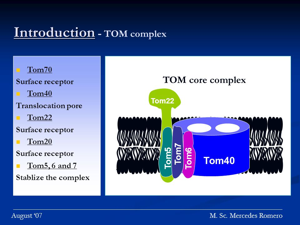 Introduction Introduction - TOM complex Tom22 Tom40 Tom6 Tom5 Tom7 TOM core complex M.