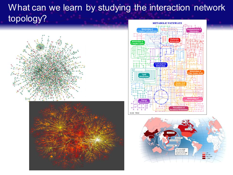 What can we learn by studying the interaction network topology
