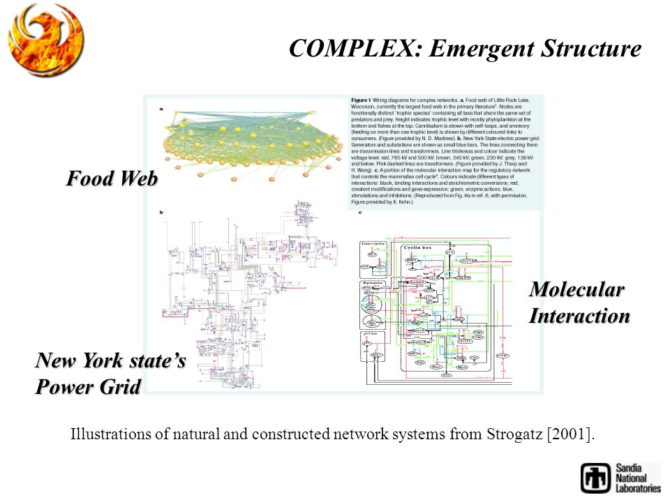 Illustrations of natural and constructed network systems from Strogatz [2001].