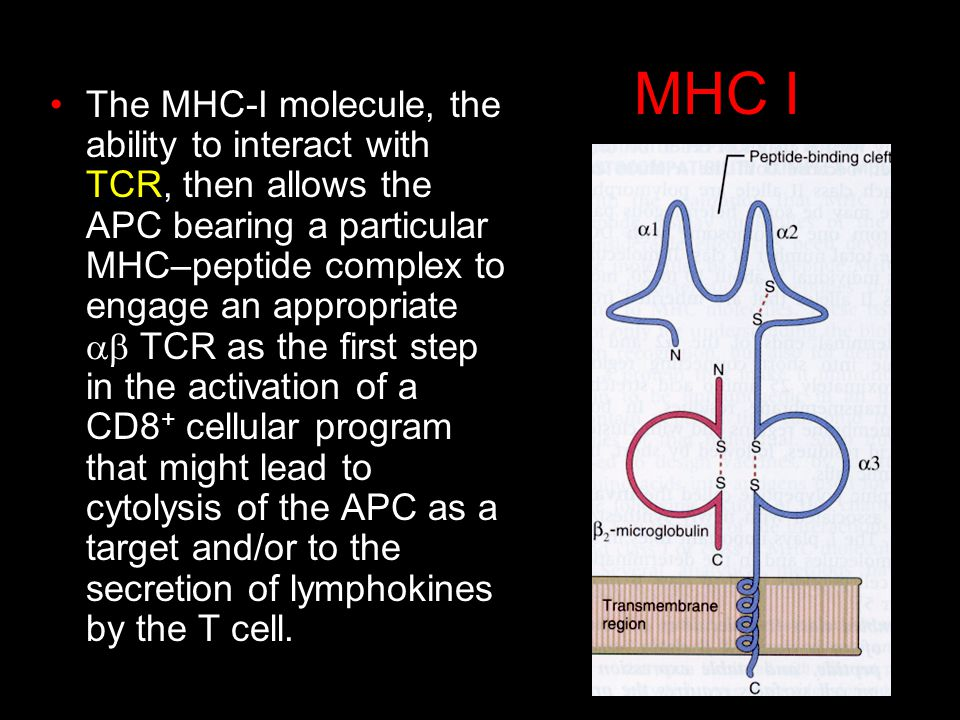 MHC I The MHC-I molecule, the ability to interact with TCR, then allows the APC bearing a particular MHC–peptide complex to engage an appropriate TCR as the first step in the activation of a CD8 + cellular program that might lead to cytolysis of the APC as a target and/or to the secretion of lymphokines by the T cell.