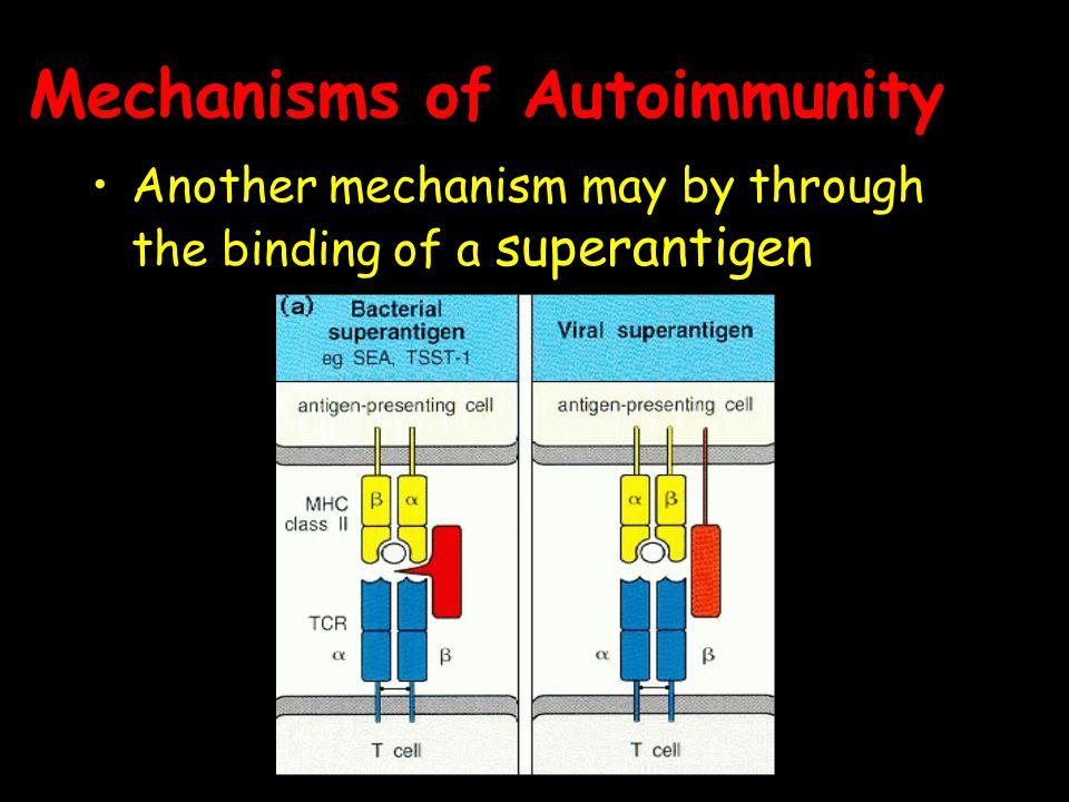 Mechanisms of Autoimmunity Another mechanism may by through the binding of a superantigen