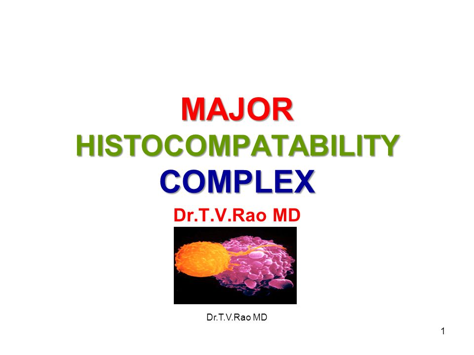 MHC - The Major Histocompatibility Complex 1)Originally identified in mice as blood cell antigens by R.A.