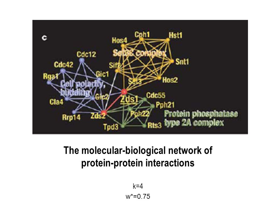 The molecular-biological network of protein-protein interactions k=4 w*=0.75