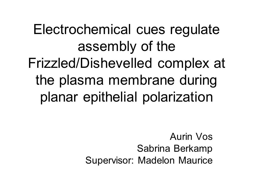 Electrochemical cues regulate assembly of the Frizzled/Dishevelled complex at the plasma membrane during planar epithelial polarization Aurin Vos Sabrina Berkamp Supervisor: Madelon Maurice