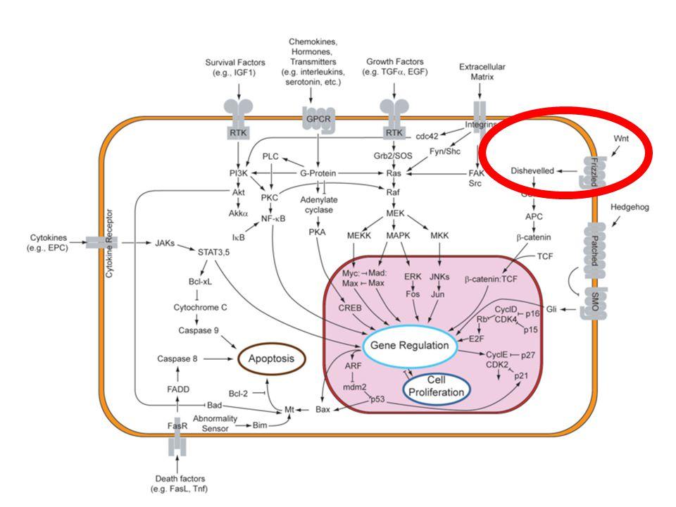 Dsh lipid binding II