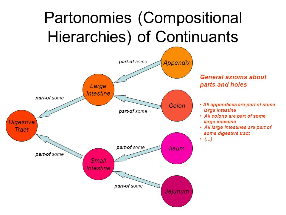 Partonomies (Compositional Hierarchies) of Continuants Digestive Tract Large Intestine Small Intestine Ileum Jejunum Appendix Colon part-of some General axioms about parts and holes All appendices are part of some large intestine All colons are part of some large intestine All large intestines are part of some digestive tract (…)