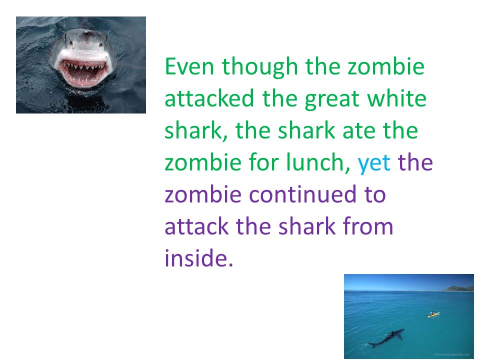 Footer Area Even though the zombie attacked the great white shark, the shark ate the zombie for lunch, yet the zombie continued to attack the shark from inside.