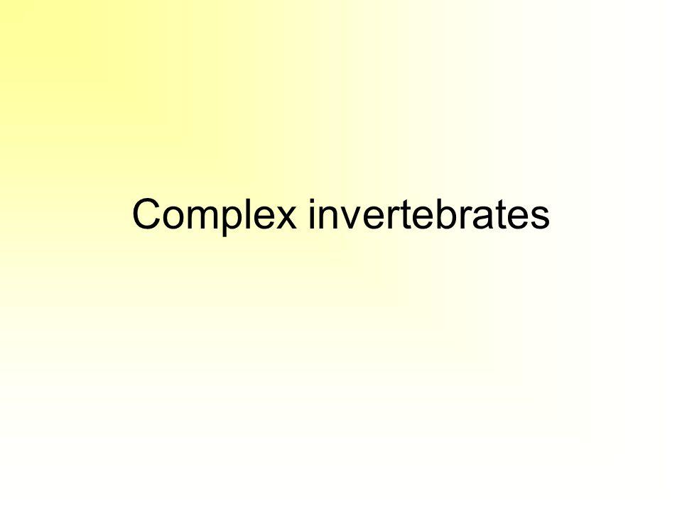 Complex invertebrates