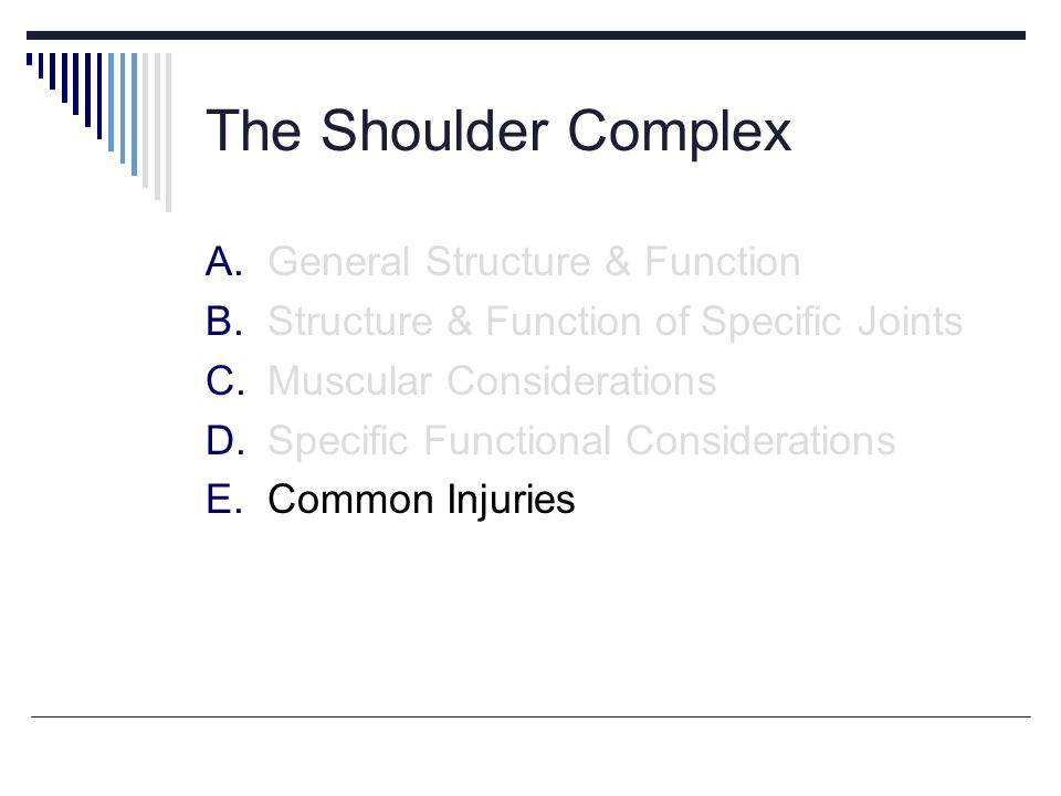 The Shoulder Complex A.General Structure & Function B.Structure & Function of Specific Joints C.Muscular Considerations D.Specific Functional Considerations E.Common Injuries