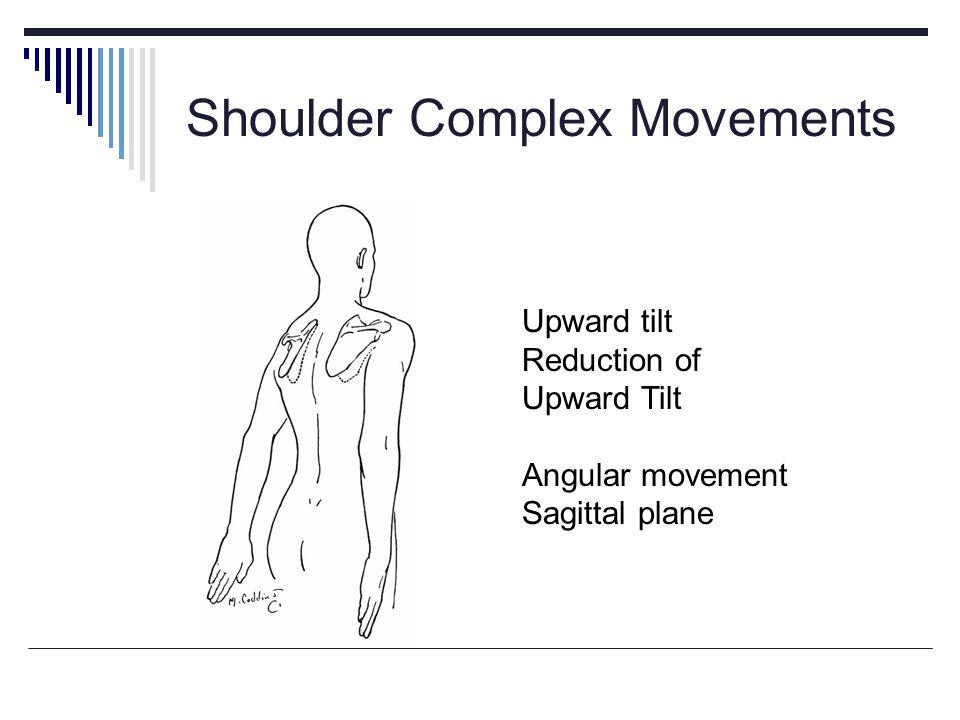Shoulder Complex Movements Upward tilt Reduction of Upward Tilt Angular movement Sagittal plane