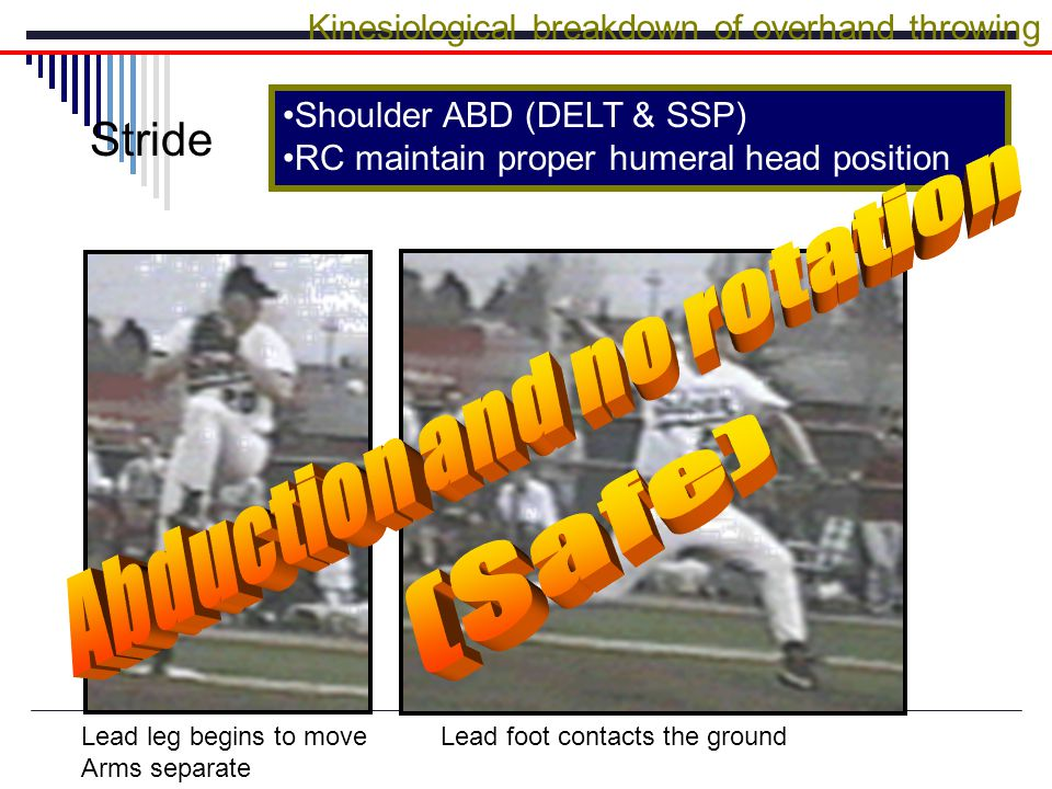 Shoulder ABD (DELT & SSP) RC maintain proper humeral head position Kinesiological breakdown of overhand throwing Stride Lead leg begins to move Arms separate Lead foot contacts the ground