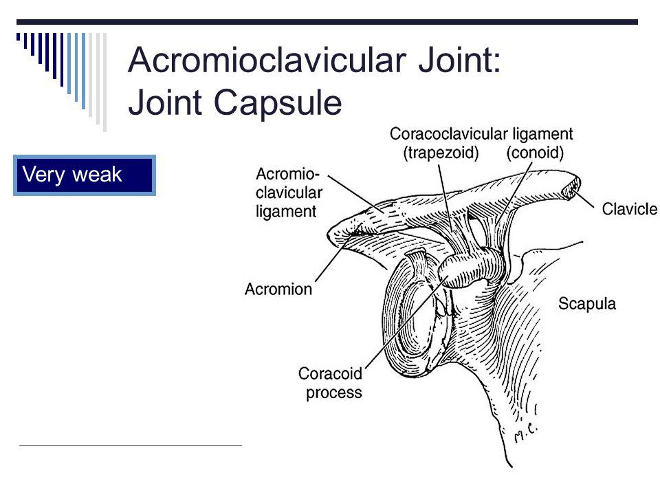 Acromioclavicular Joint: Joint Capsule Very weak