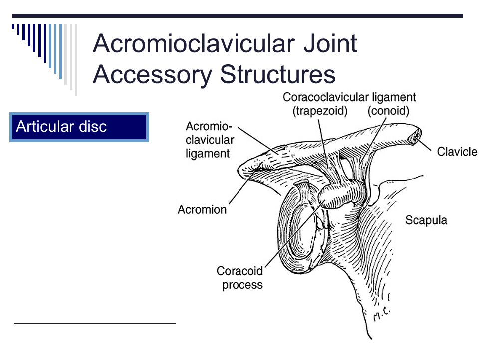Acromioclavicular Joint Accessory Structures Articular disc