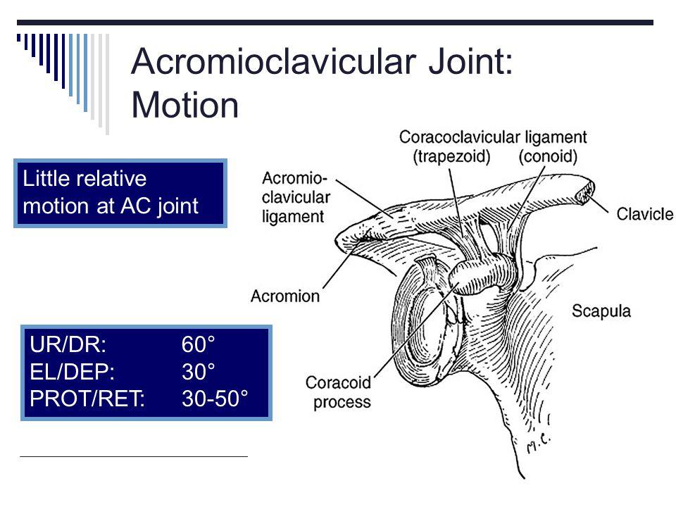 Acromioclavicular Joint: Motion Little relative motion at AC joint UR/DR:60° EL/DEP: 30° PROT/RET: 30-50°