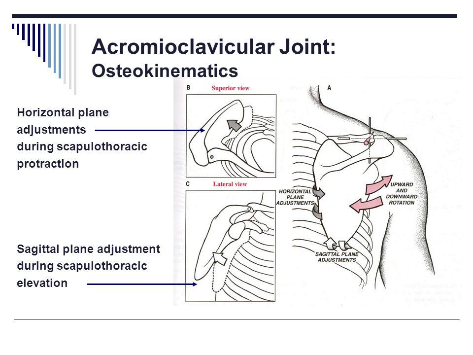 Acromioclavicular Joint: Osteokinematics Horizontal plane adjustments during scapulothoracic protraction Sagittal plane adjustment during scapulothoracic elevation