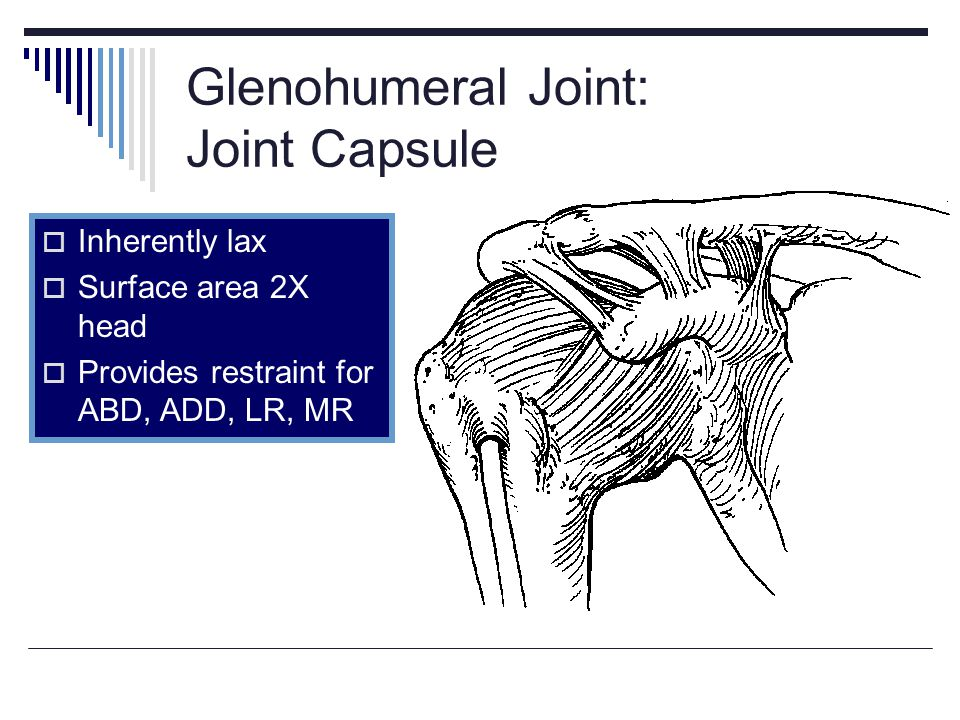 Glenohumeral Joint: Joint Capsule Inherently lax Surface area 2X head Provides restraint for ABD, ADD, LR, MR