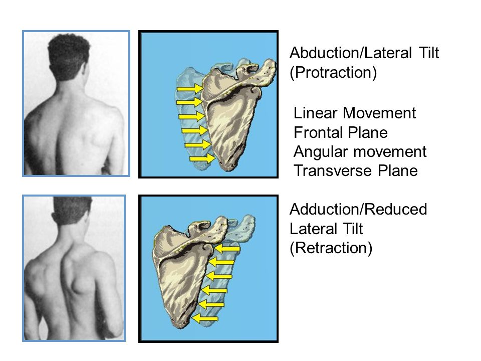 Abduction/Lateral Tilt (Protraction) Adduction/Reduced Lateral Tilt (Retraction) Linear Movement Frontal Plane Angular movement Transverse Plane