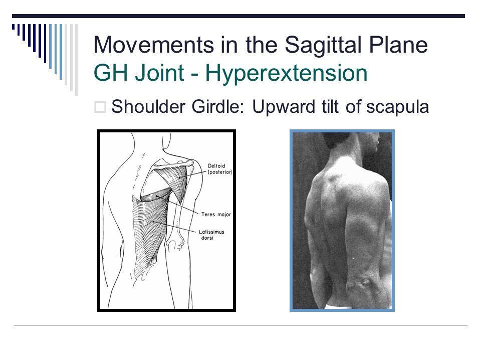 Movements in the Sagittal Plane GH Joint - Hyperextension Shoulder Girdle: Upward tilt of scapula Fig 5.20