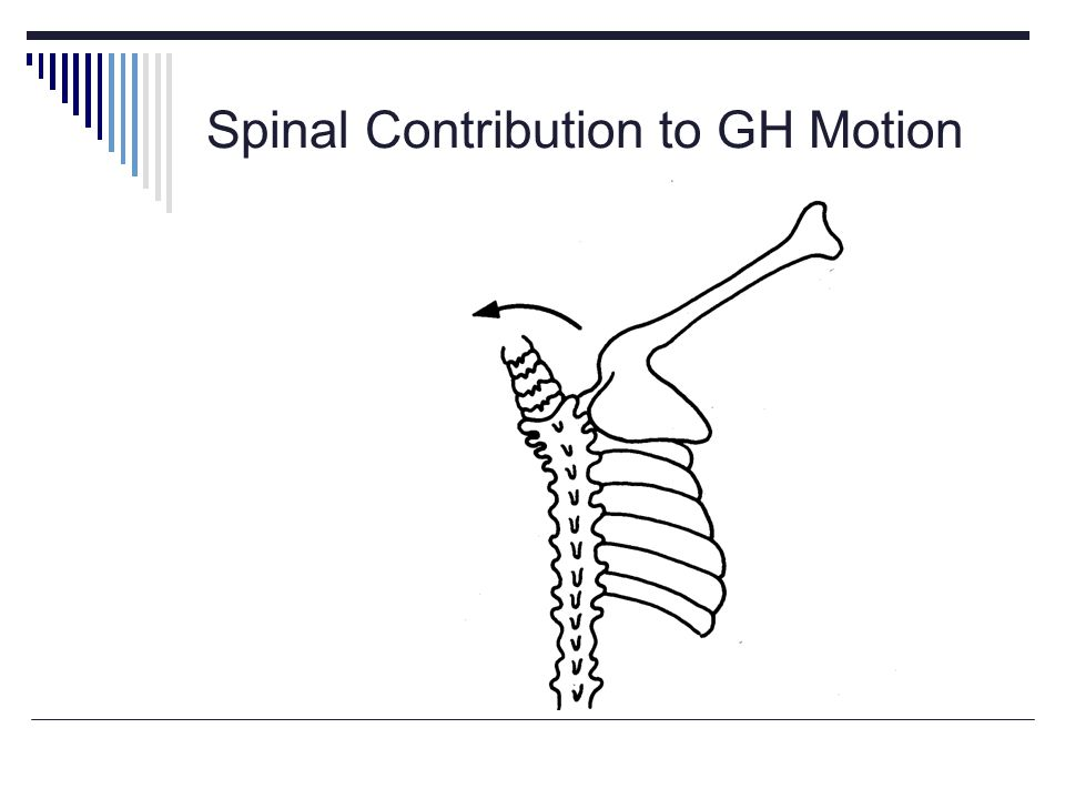 Spinal Contribution to GH Motion