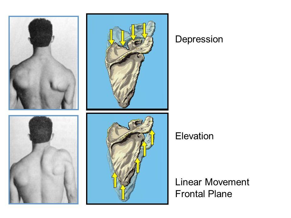 Depression Elevation Linear Movement Frontal Plane