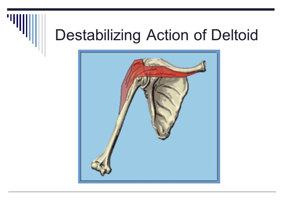 Destabilizing Action of Deltoid