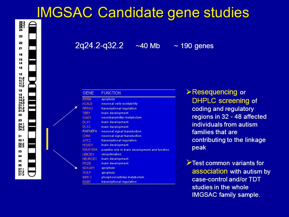 2q24.2-q32.2 ~40 Mb ~ 190 genes IMGSAC Candidate gene studies Resequencing or DHPLC screening of coding and regulatory regions in 32 - 48 affected individuals from autism families that are contributing to the linkage peak Test common variants for association with autism by case-control and/or TDT studies in the whole IMGSAC family sample.