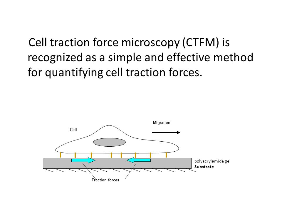 Cell traction force microscopy (CTFM) is recognized as a simple and effective method for quantifying cell traction forces.