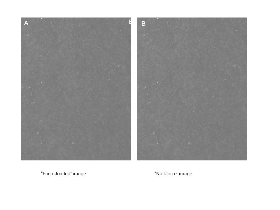 A B Force-loaded image Null-force image B