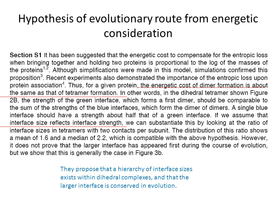 Hypothesis of evolutionary route from energetic consideration They propose that a hierarchy of interface sizes exists within dihedral complexes, and that the larger interface is conserved in evolution.