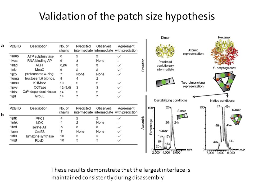 Validation of the patch size hypothesis These results demonstrate that the largest interface is maintained consistently during disassembly.