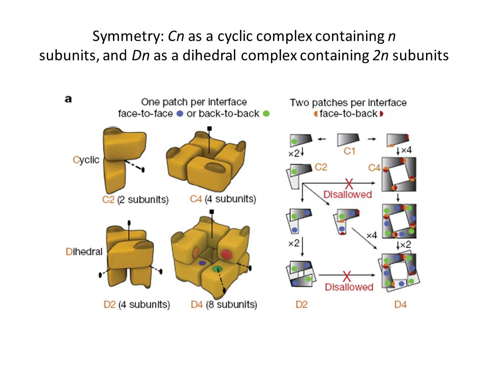 Symmetry: Cn as a cyclic complex containing n subunits, and Dn as a dihedral complex containing 2n subunits