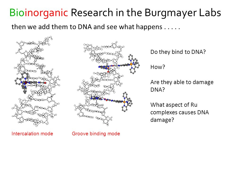 Bioinorganic Research in the Burgmayer Labs then we add them to DNA and see what happens.....