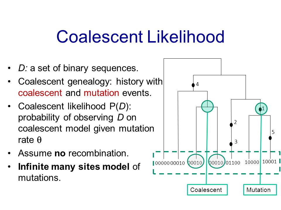 Coalescent Likelihood D: a set of binary sequences.