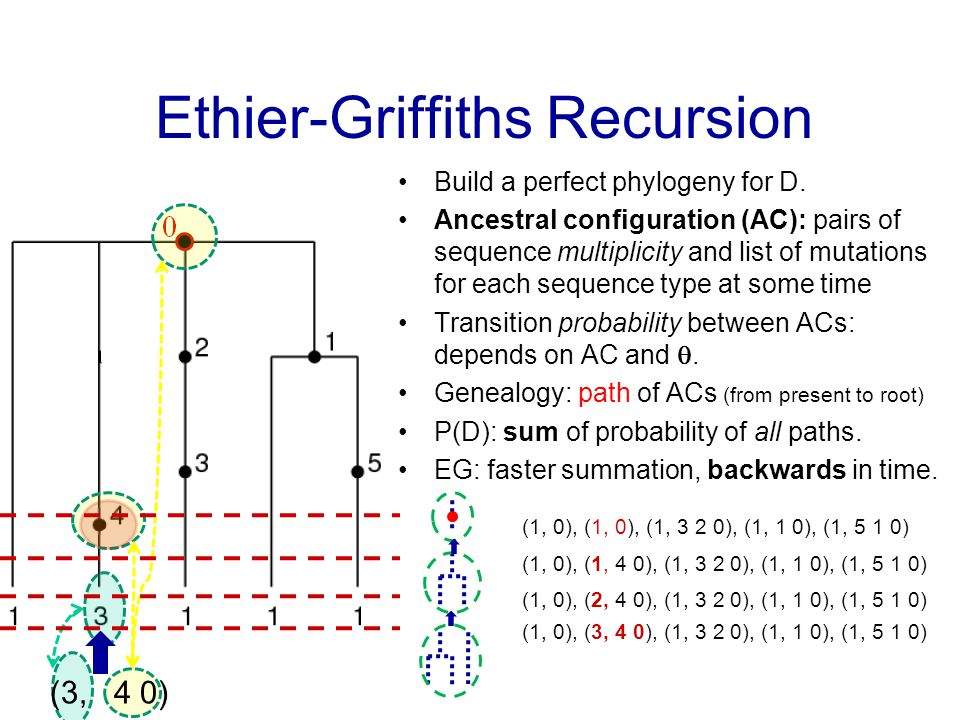 Ethier-Griffiths Recursion Build a perfect phylogeny for D.