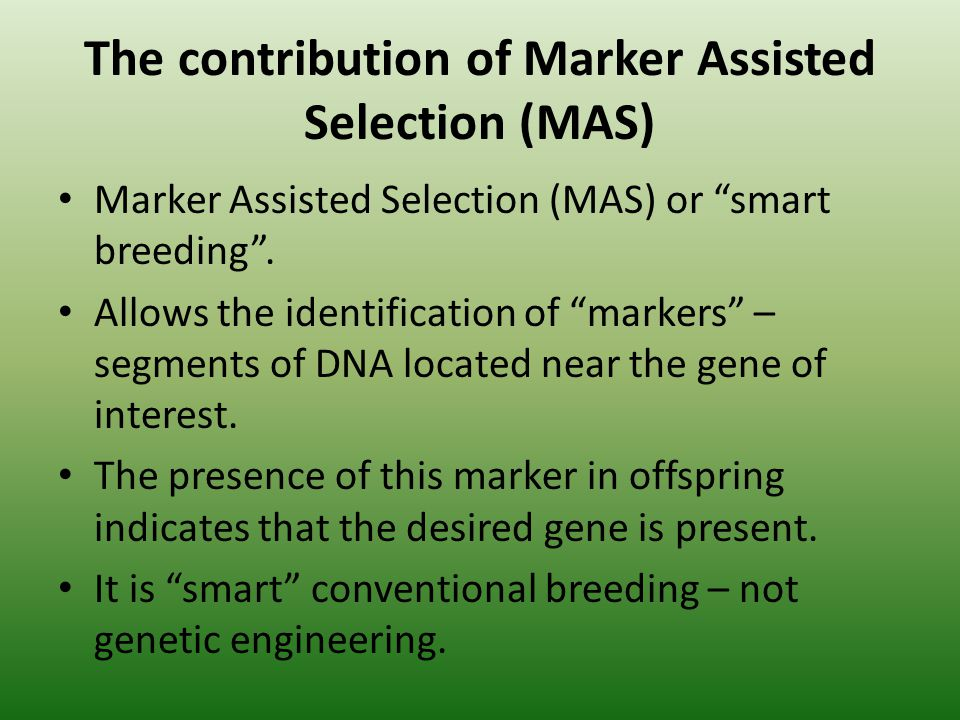 The contribution of Marker Assisted Selection (MAS) Marker Assisted Selection (MAS) or smart breeding. Allows the identification of markers – segments