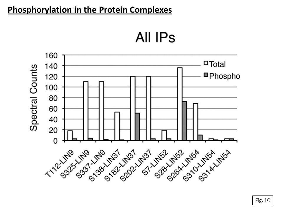Fig. 1C Phosphorylation in the Protein Complexes