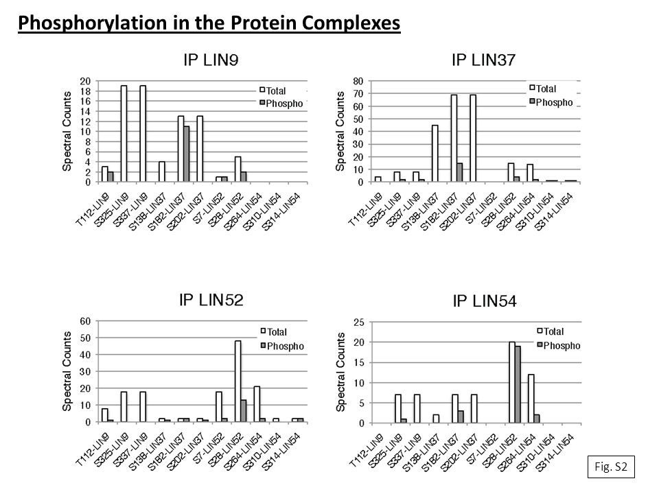 Phosphorylation in the Protein Complexes Fig. S2
