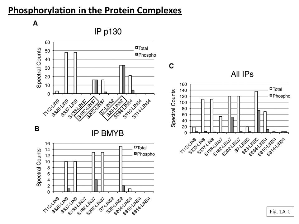 Fig. 1A-C Phosphorylation in the Protein Complexes