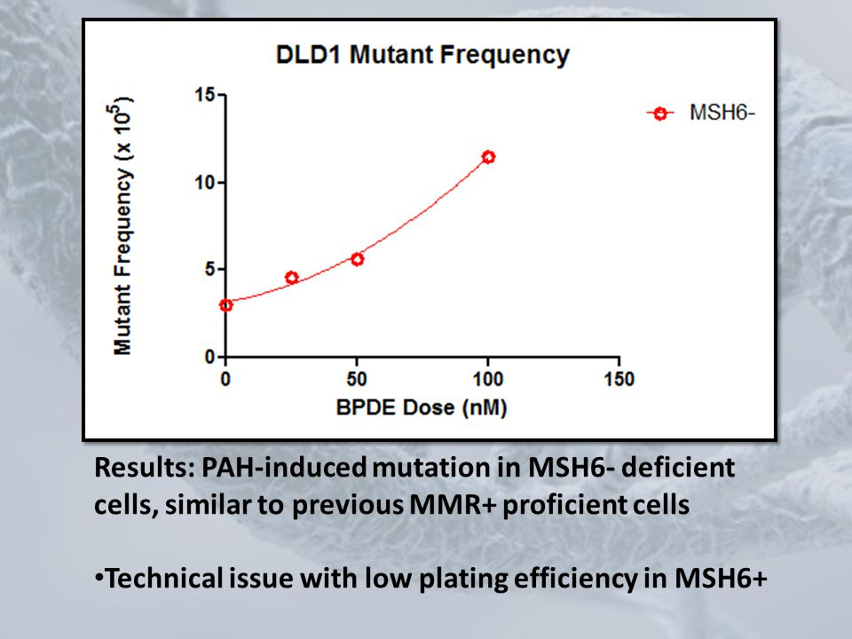 Results: PAH-induced mutation in MSH6- deficient cells, similar to previous MMR+ proficient cells Technical issue with low plating efficiency in MSH6+