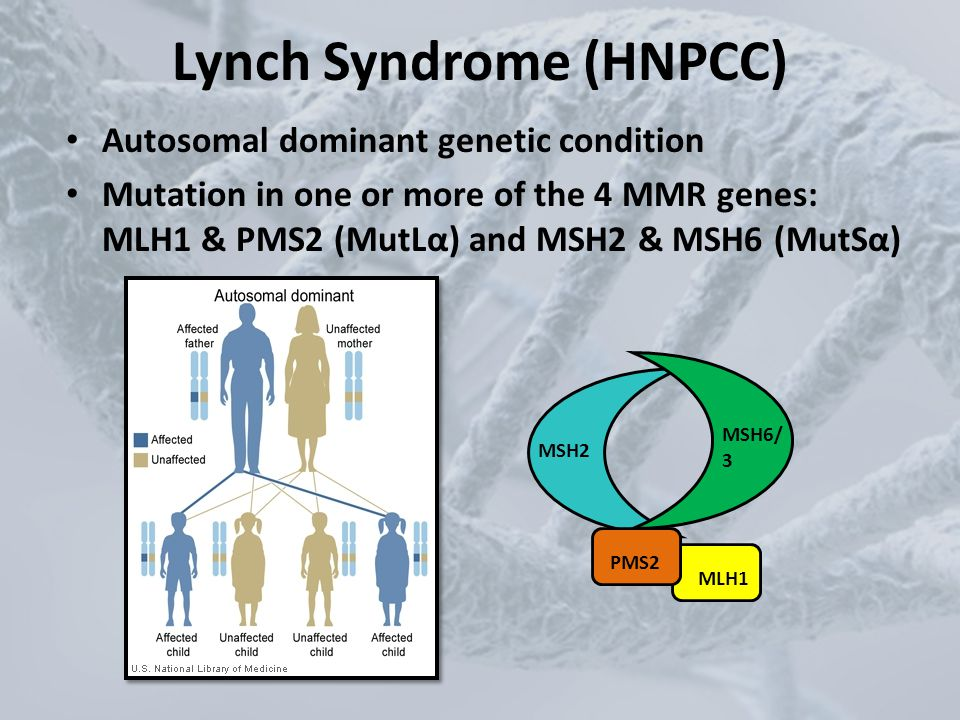 Lynch Syndrome (HNPCC) Autosomal dominant genetic condition Mutation in one or more of the 4 MMR genes: MLH1 & PMS2 (MutLα) and MSH2 & MSH6 (MutSα) MS