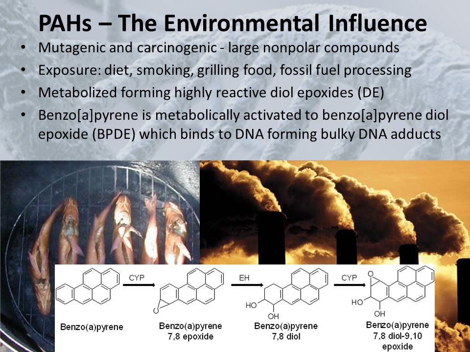 PAHs – The Environmental Influence Mutagenic and carcinogenic - large nonpolar compounds Exposure: diet, smoking, grilling food, fossil fuel processin