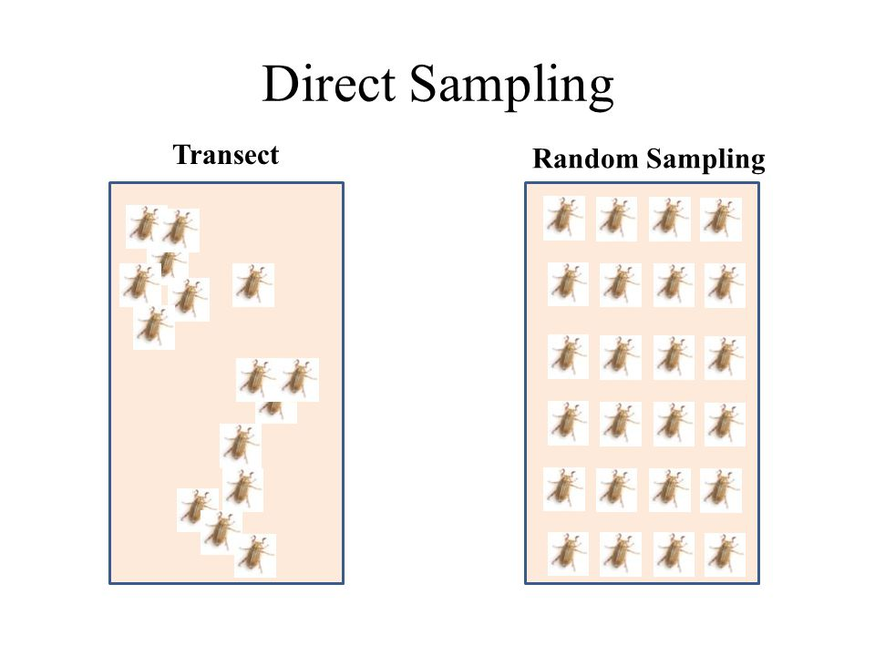 Direct Sampling Transect Random Sampling