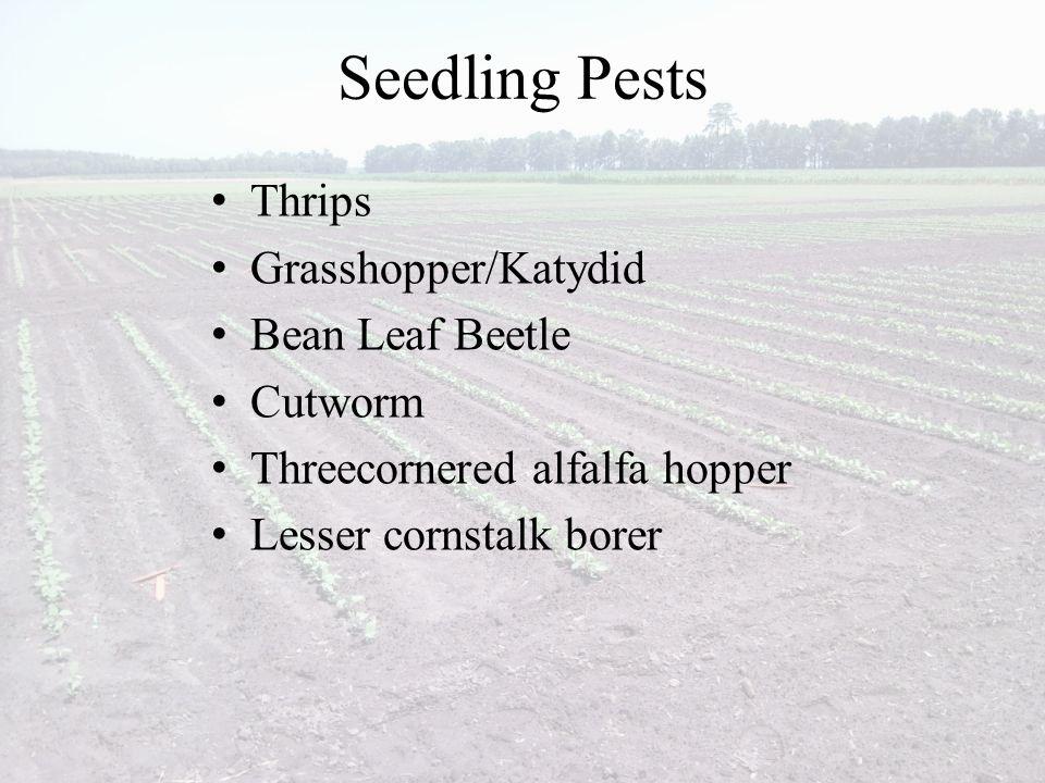 Seedling Pests Thrips Grasshopper/Katydid Bean Leaf Beetle Cutworm Threecornered alfalfa hopper Lesser cornstalk borer